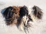 Picture of Yak tails